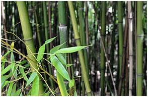 Bambou attitude - ateliers de management et de bien-etre au travail
